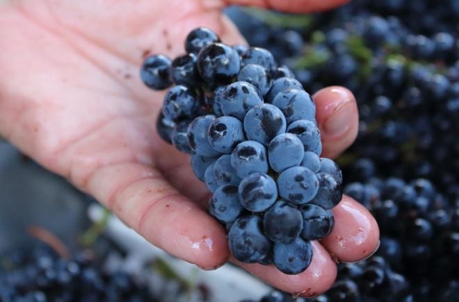 Bush Crispo Pinot Noir 038